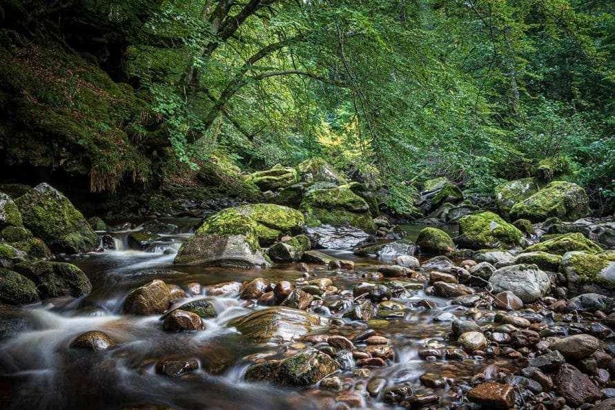 Cawdor Forest - things to do near Nairn