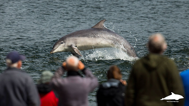 Crowds at Chanonry Point dolphin watching